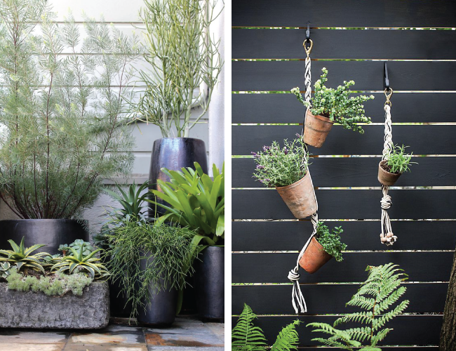 Creating a Cosy Garden  - Potted & Hanging Plants | A Living Diary